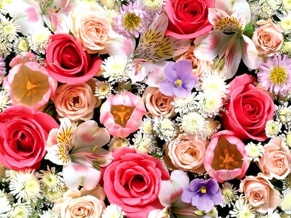 Mélange de fleurs