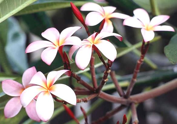 Jolies fleurs d'arbre