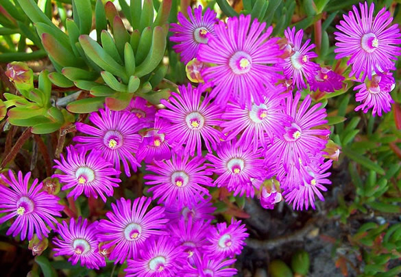 Etonnantes fleurs mauves