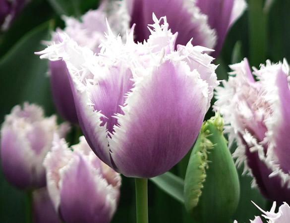 fleurs_067