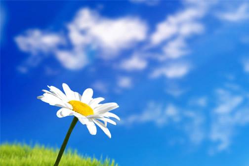 Marguerite et ciel bleu