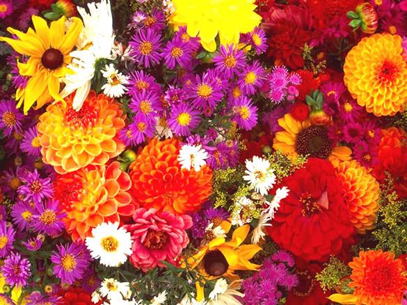 Mélange de fleurs vibrantes