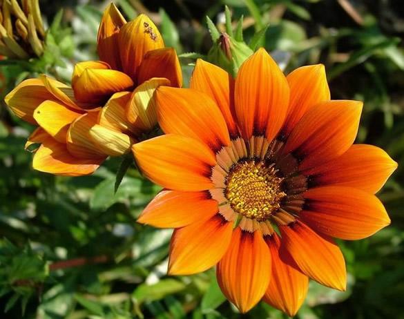 Belle fleur orangée
