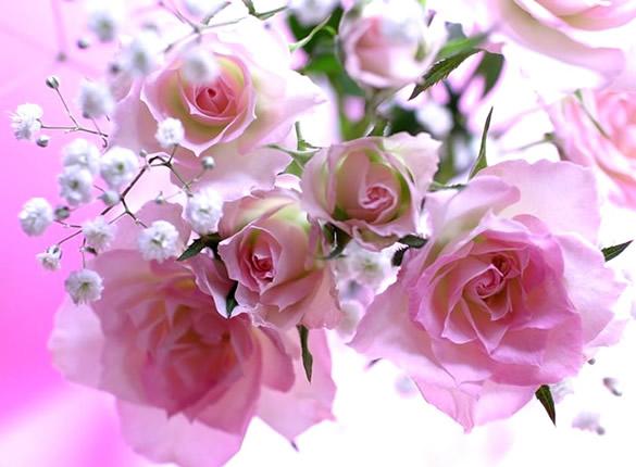 Douces roses rosées