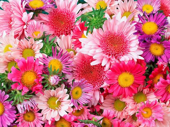 Fleurs roses et mauves