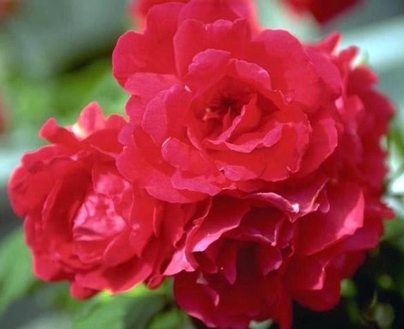 Belle fleur rouge