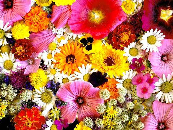 Parterre de fleurs multicolores