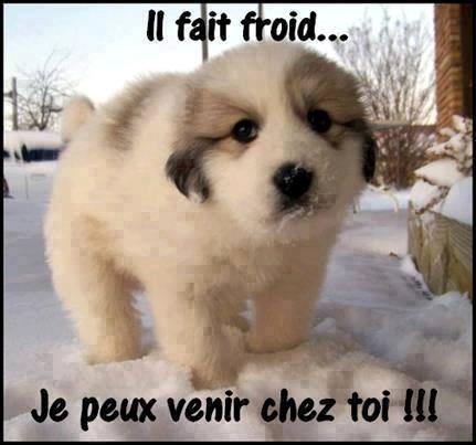 Il fait froid... Je peux venir chez toi !!!