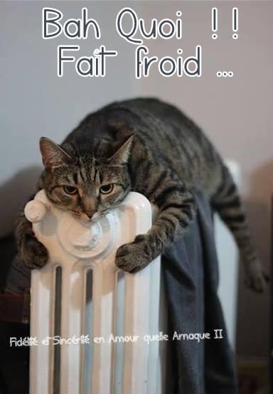 Bah Quoi !! Fait froid