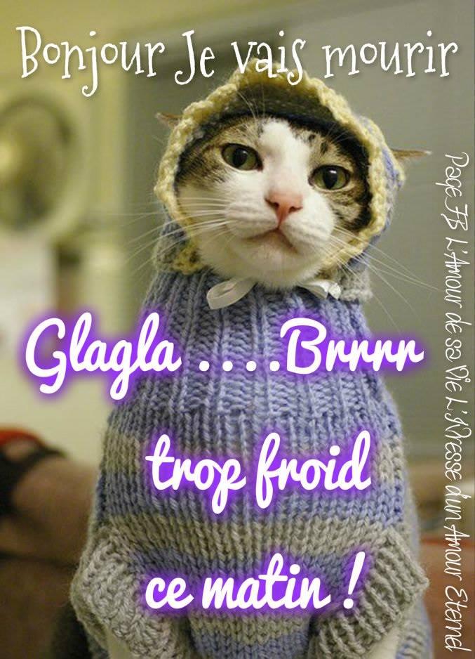Bonjour, je vais mourir. Glagla... Brrrr trop froid ce matin !