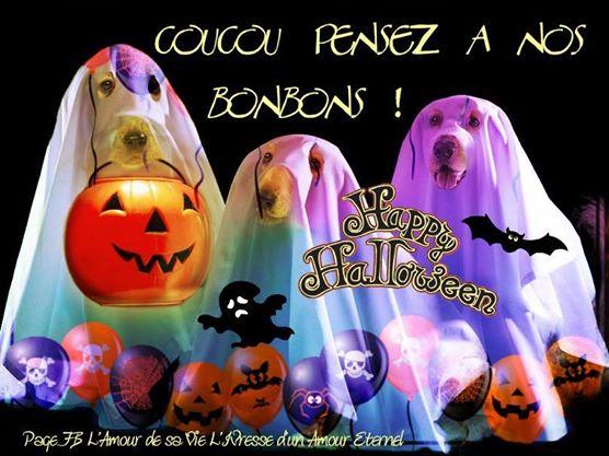 Coucou pensez à nos bonbons! Happy Halloween