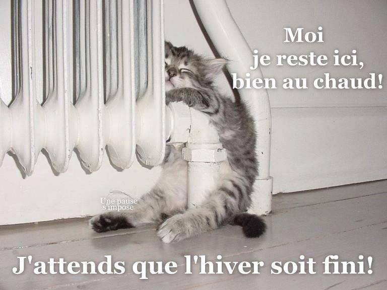 Moi je reste ici, bien au chaud! J'attends que l'hiver soit fini!