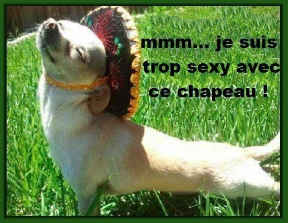 mmm...je suis trop sexy avec mon chapeau !
