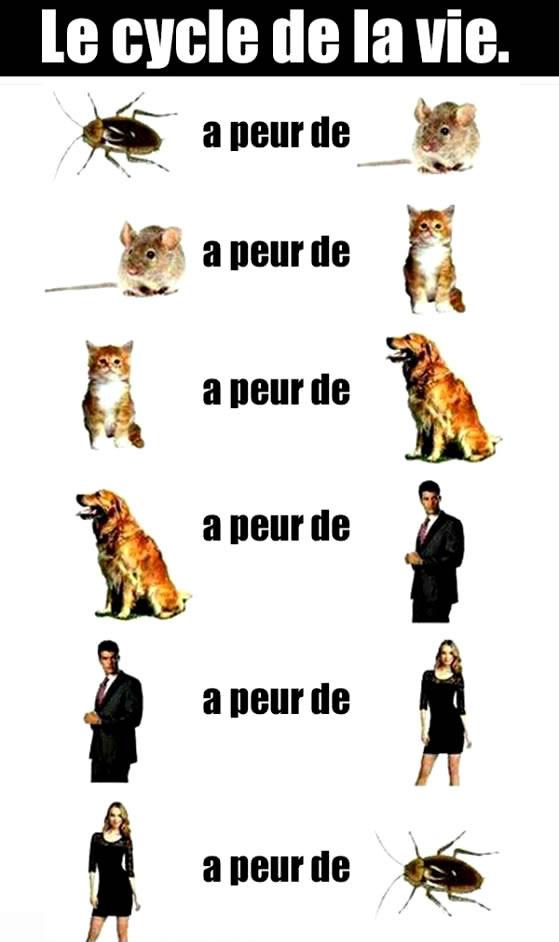 Humour image 1