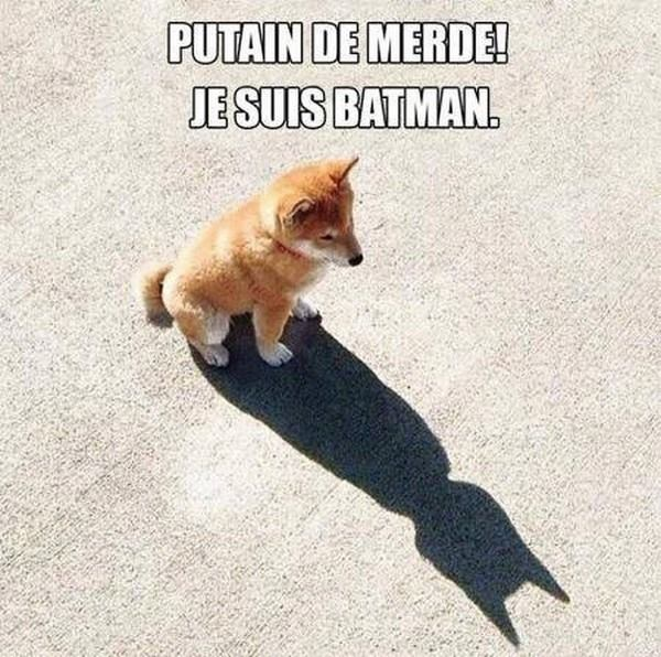 Putain de merde! Je suis Batman