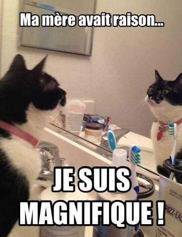 Á… 35 Humour Images Photos Et Illustrations Pour Facebook Bonnesimages