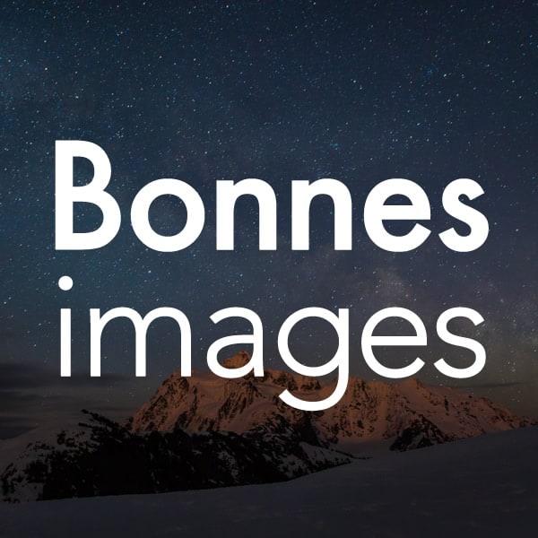 loup couché dans la neige
