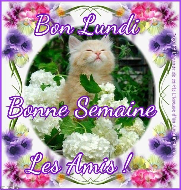Bon Lundi, Bonne Semaine les Amis !