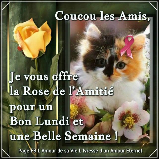Coucou les Amis, Je vous offre la Rose de l'Amitié...