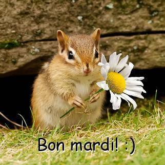 Bon mardi ! :)
