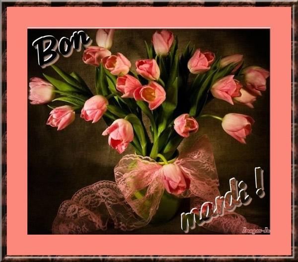 Mardi image 6