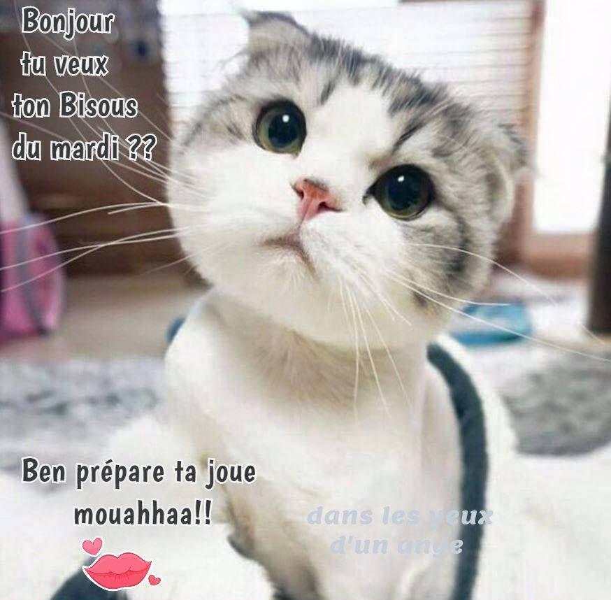 """Résultat de recherche d'images pour """"image humoristique pour dire bonjour"""""""