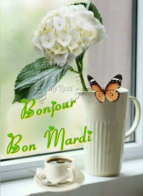 Bonjour, Bon Mardi