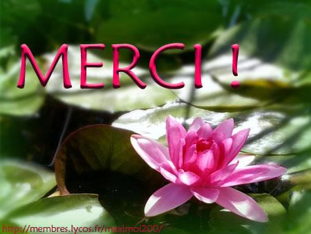 merci_008.jpg