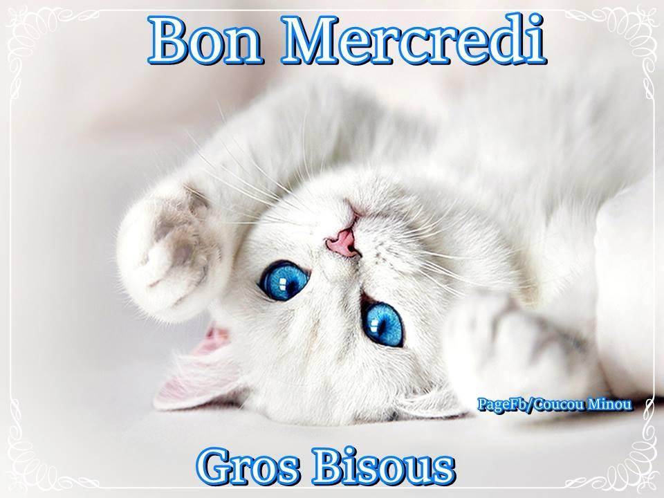 """Résultat de recherche d'images pour """"mercredi chat"""""""