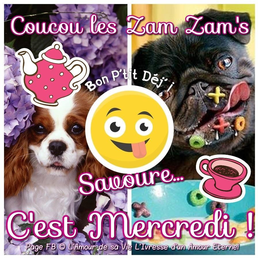 Coucou les Zam Zam's, C'est Mercredi !