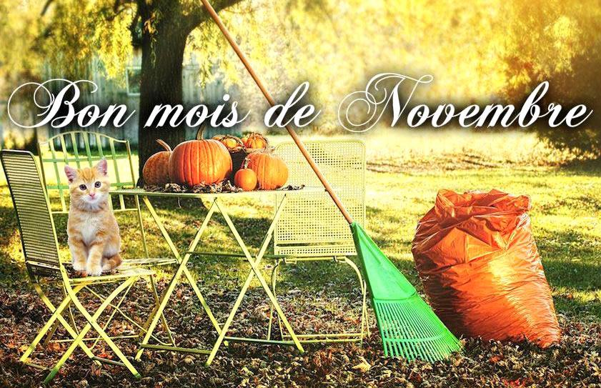 Bon mois de Novembre