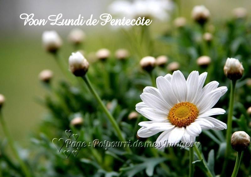 Bon lundi de pentec te image 6984 bonnesimages - Lundi de pentecote 2016 ...