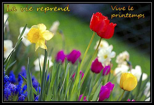 La vie reprend... Vive le printemps