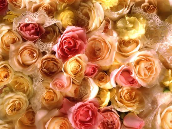 Roses pastels et dentelles