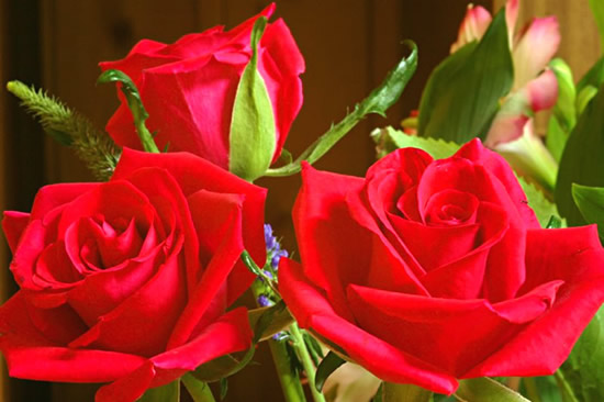 Roses image #2192