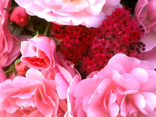 Roses image #2238