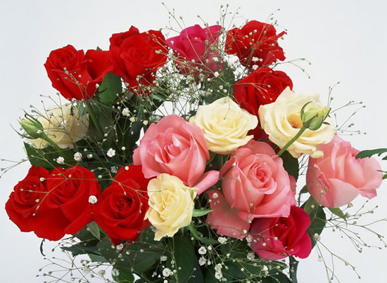 Roses image 6