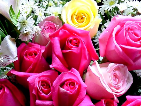 Roses image #2243