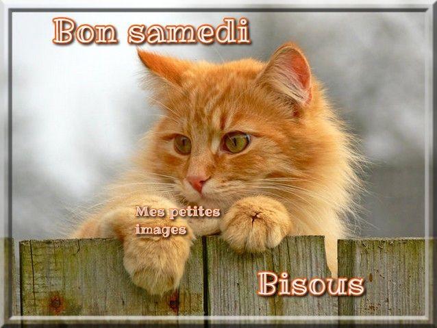 Bon samedi, Bisous