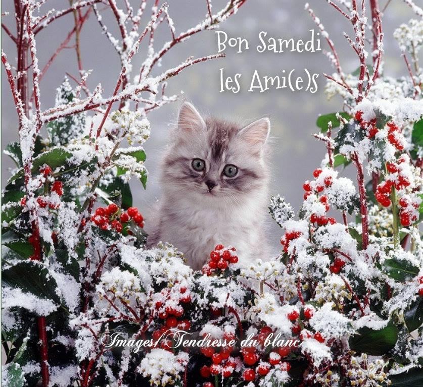 Bon Samedi les Ami(e)s