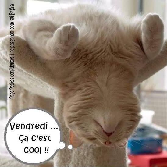 chat bienvenue Fontenay-sous-Bois